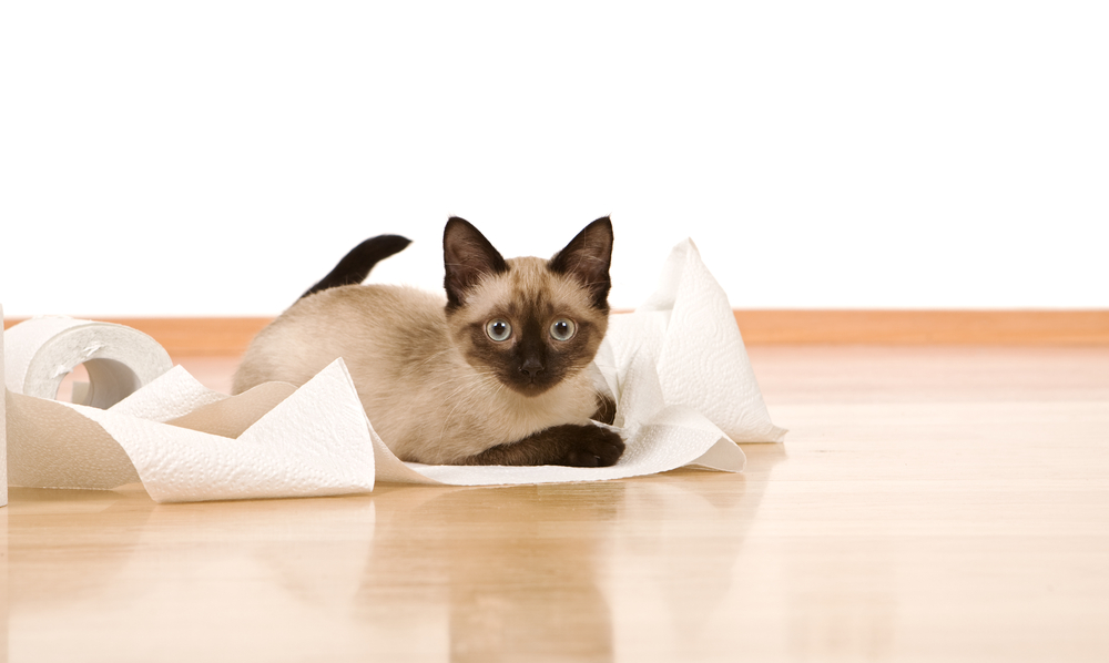 Kitten with paper